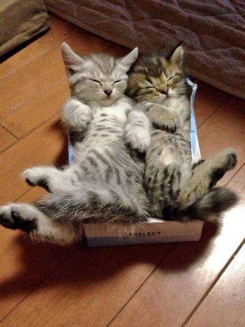 snuggles kittyworks