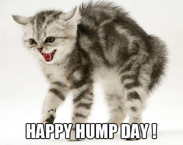 happy hump day kittyworks