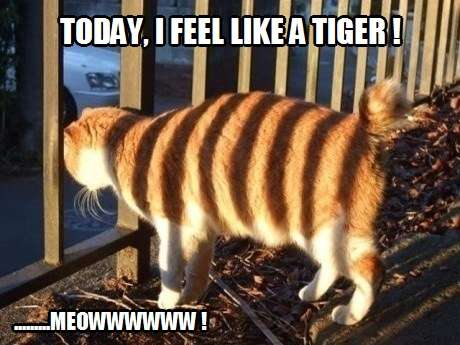 I feel like a tiger