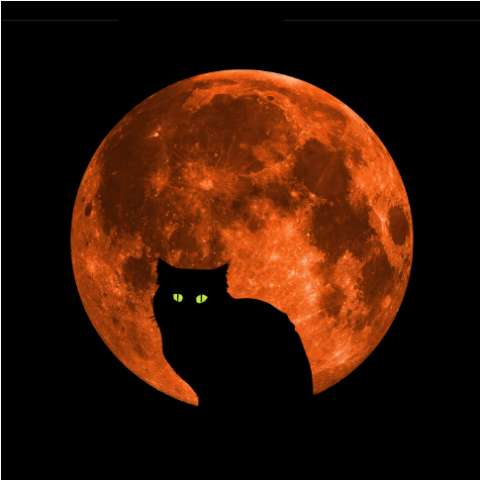 Halloween Cat Full Blood Moon T Shirt