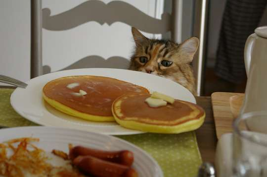 Pancakes and Cats