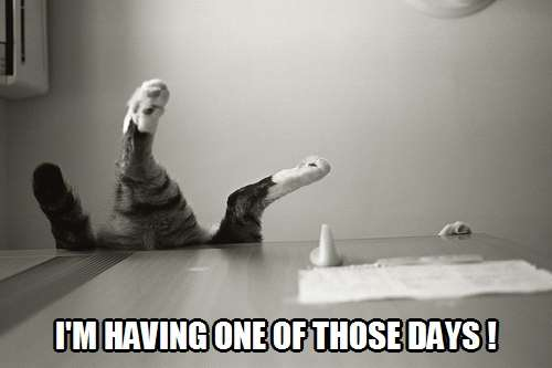 having one of those days | Kittyworks