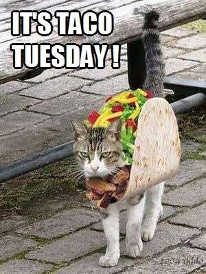 It's Taco Tuesday! | Kittyworks