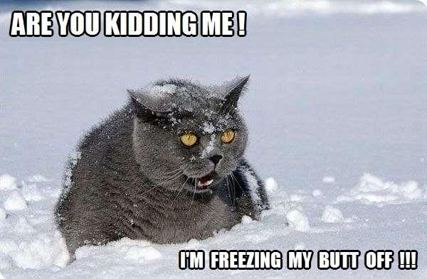 I M Freezing Kittyworks