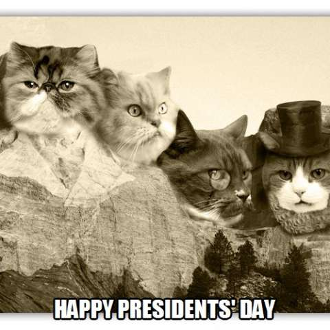 My cat is President For Life!
