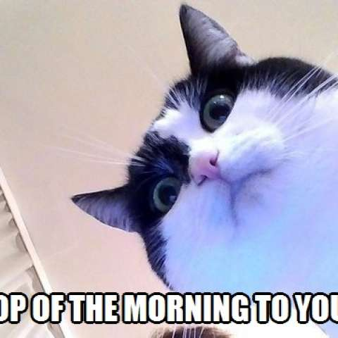 Top Of The Morning To You Kittyworks