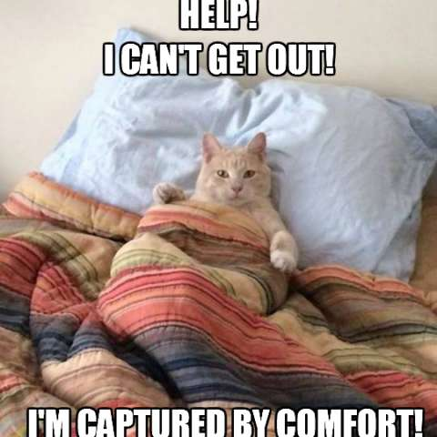 Captured by comfort