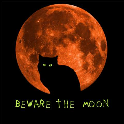 Halloween Cat | Beware the Moon | T Shirt