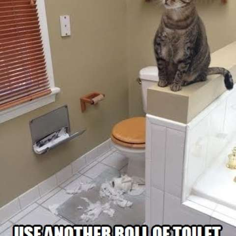 I sure could use another roll of toilet paper, please!
