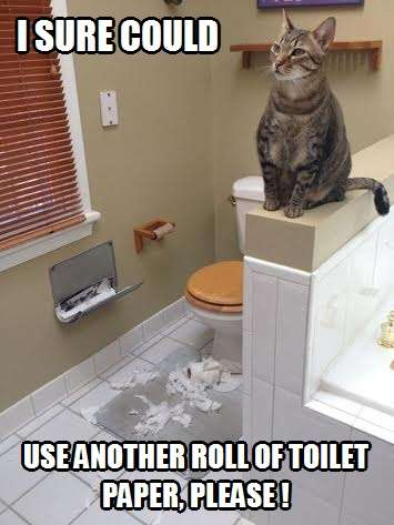 I Sure Could Use Another Roll Of Toilet Paper Please