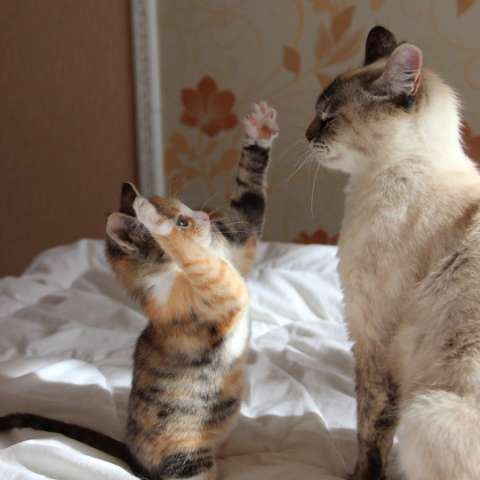 The mousie was this big!