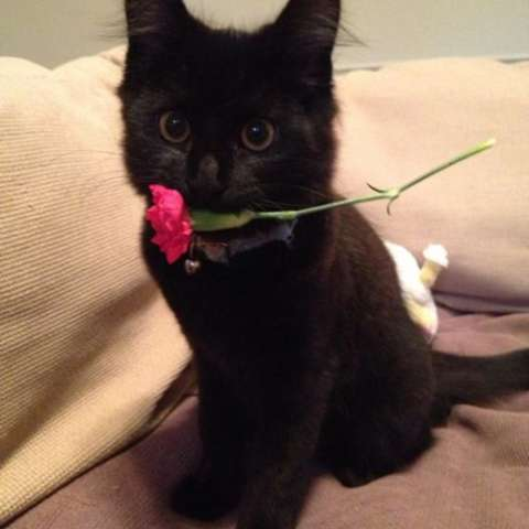 A flower for you!