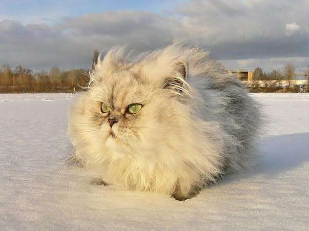 Furry Winter Cat Loaf Kittyworks