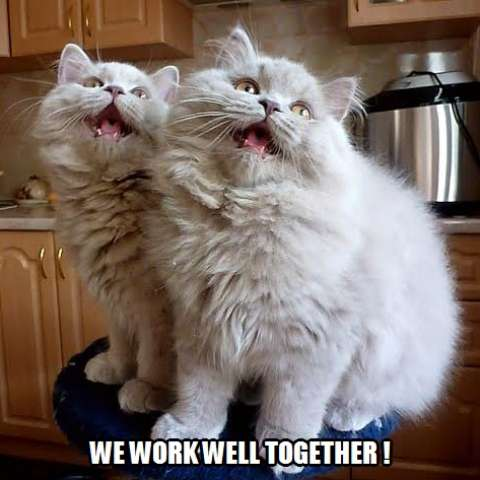 We Work Well Together Kittyworks