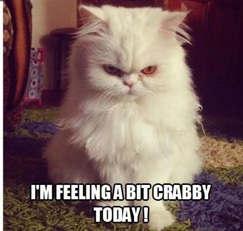 I M Feeling A Bit Crabby Today Kittyworks