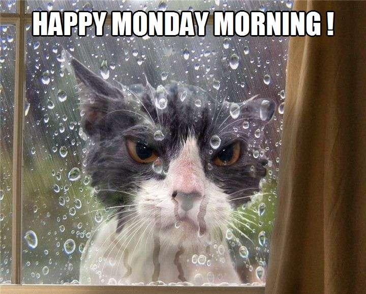 Happy Monday Morning! | Kittyworks
